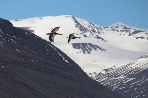 6-3-16 Faskrudsfjordur hill hike (14)