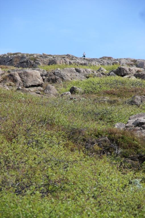 6-3-16 Faskrudsfjordur hill hike (34)