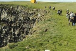 The bird cliffs