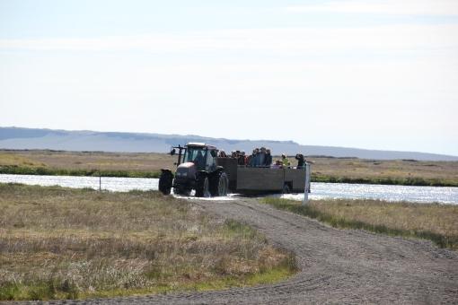 6-4-16 Cape Ingólfshöfði  tractor ride (2)