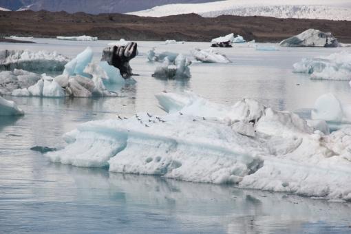 6-4-16 Jokulsarlon glacial bay  arctic terns (19)