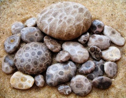 6.22.18 Petoskey stones